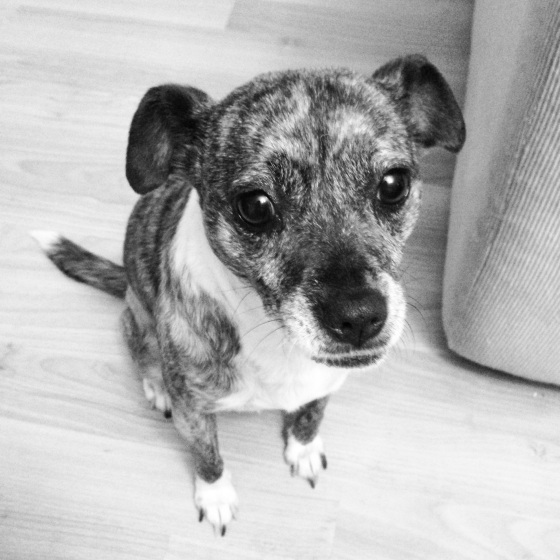 NookAndSea-Black-And-White-Dog-Puppy-Mix